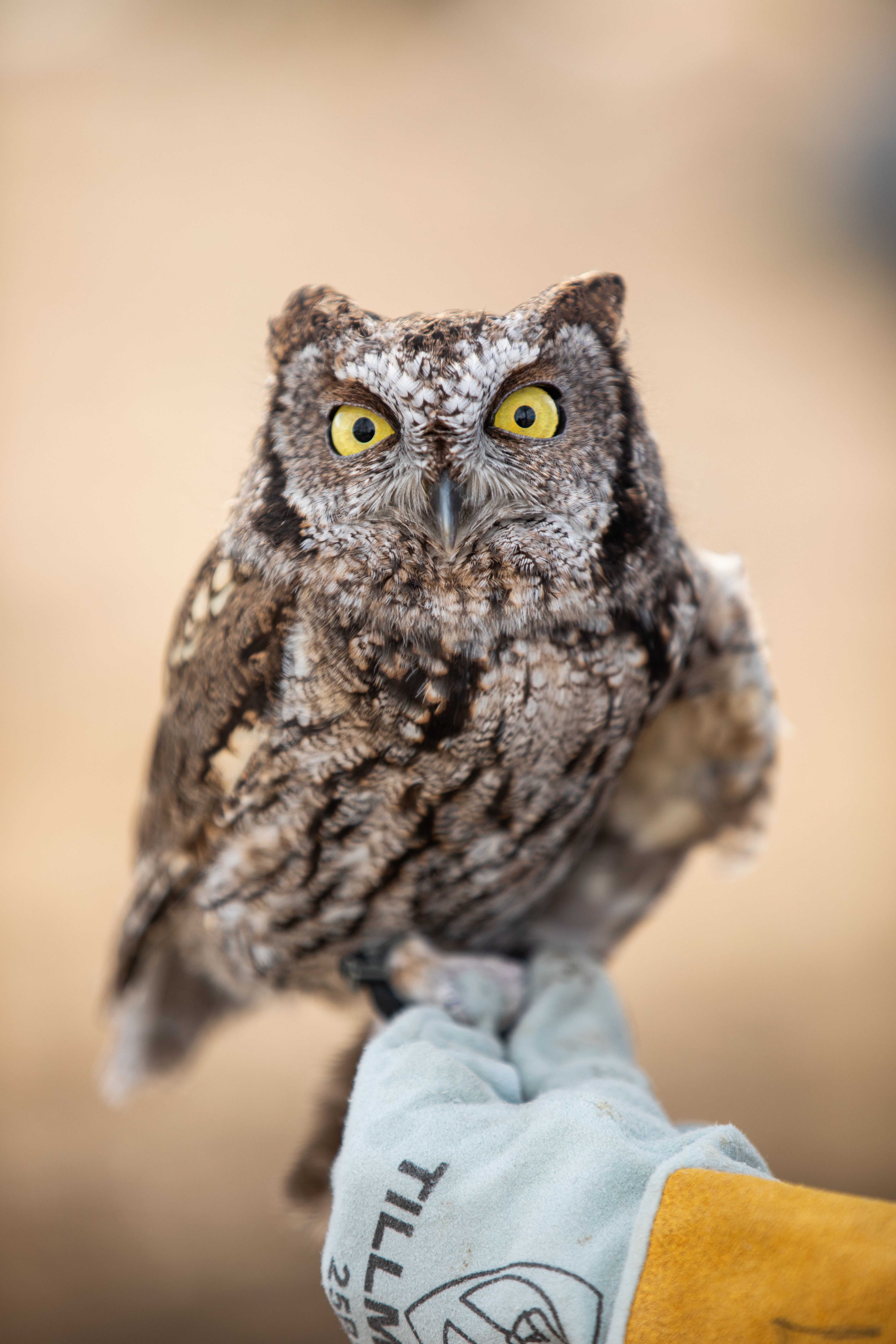 Owls of Montana: Join Montana Fish, Wildlife & Parks for a presentation that is all about owls. We will learn about this amazing group of raptors and even meet some live birds!