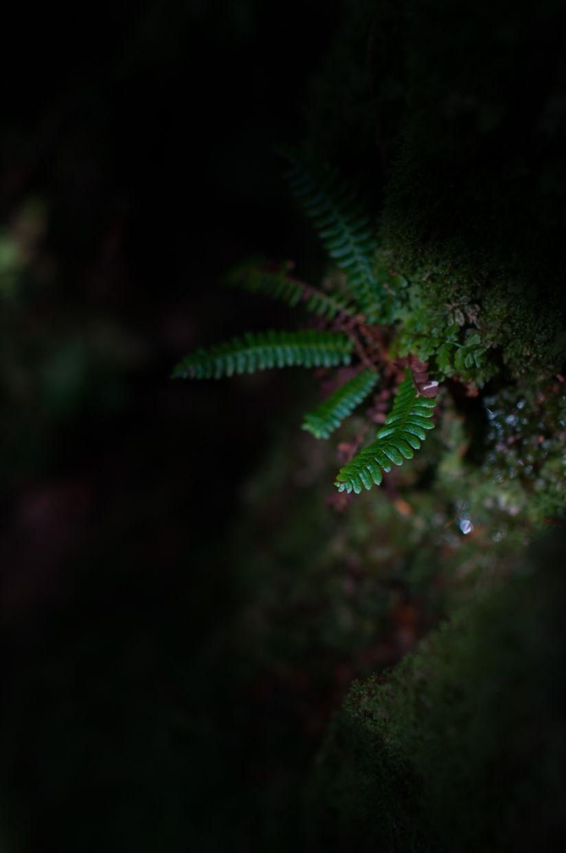 Rainbird 6, Fern in Spotlight