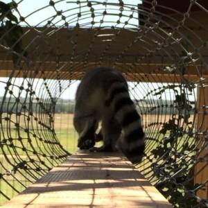New Expanded Lemur Habitat