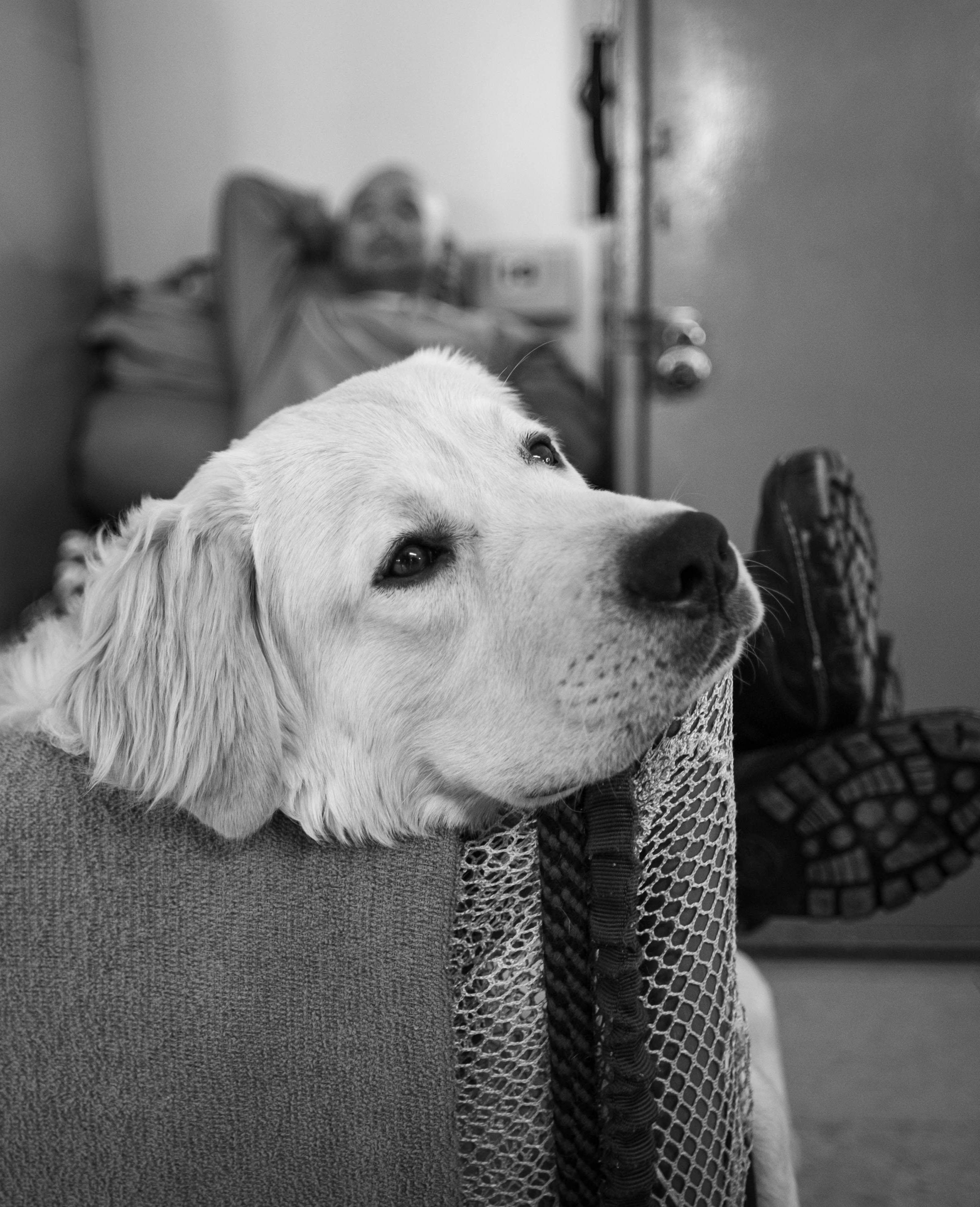 Benefits of Service Dog Support on Sleep Disorders