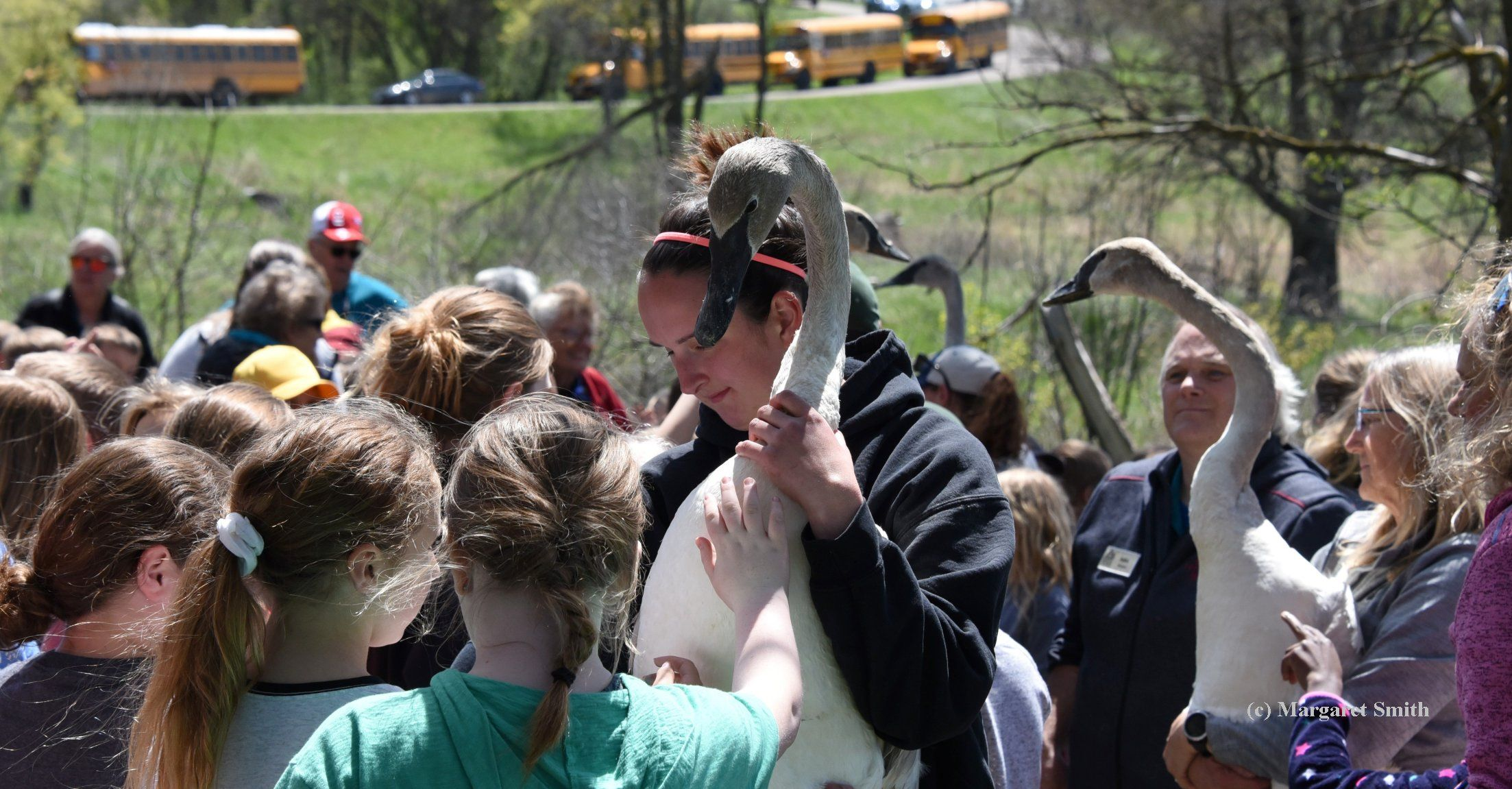 Twenty swan cygnets released in southern Iowa to Trumpet the Cause for Wetlands