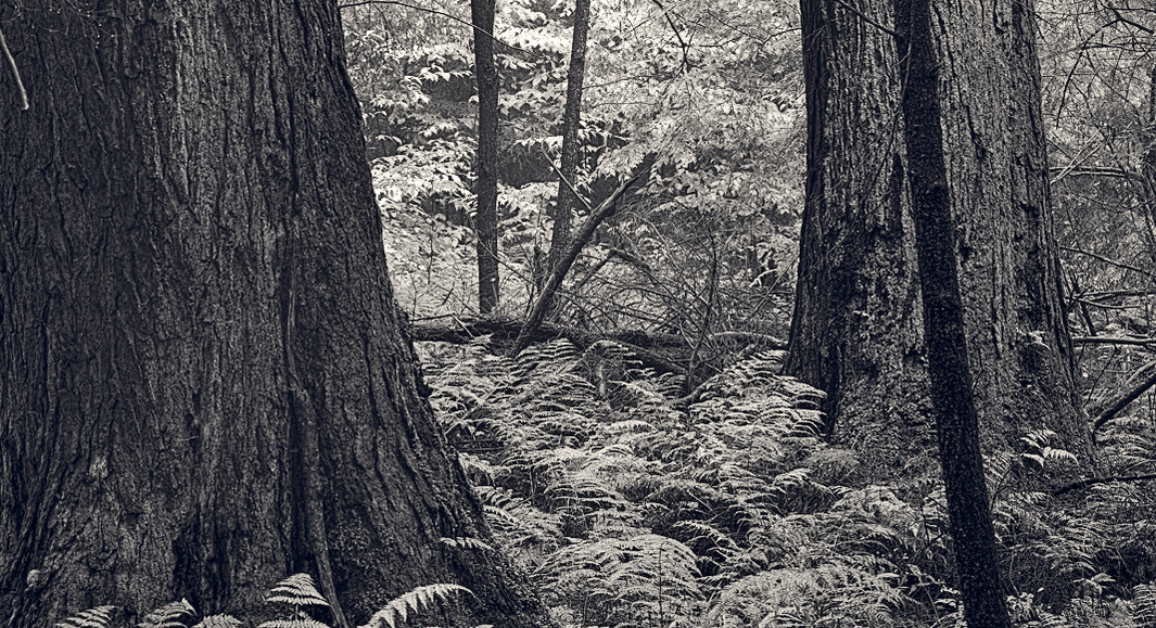 TREES, landscape photographs by Mark Muse, now on view...