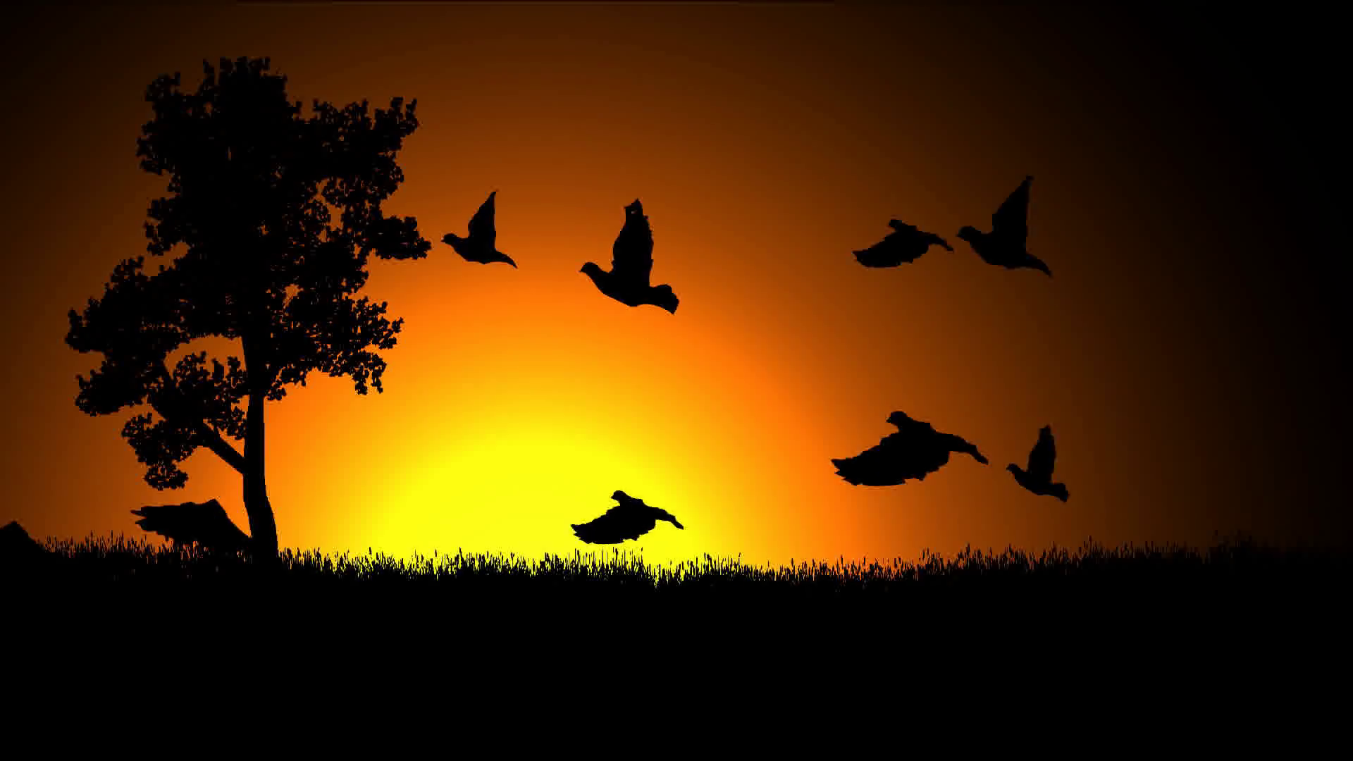 Wild Bird Kids Program