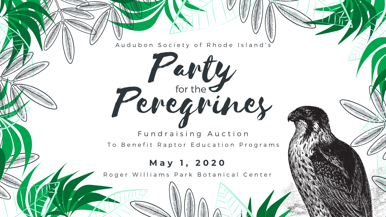 Party for the Peregrines Audubon Society of Rhode Island Annual Fundraiser
