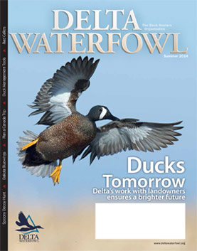 Summer Issue Features Ducks Tomorrow