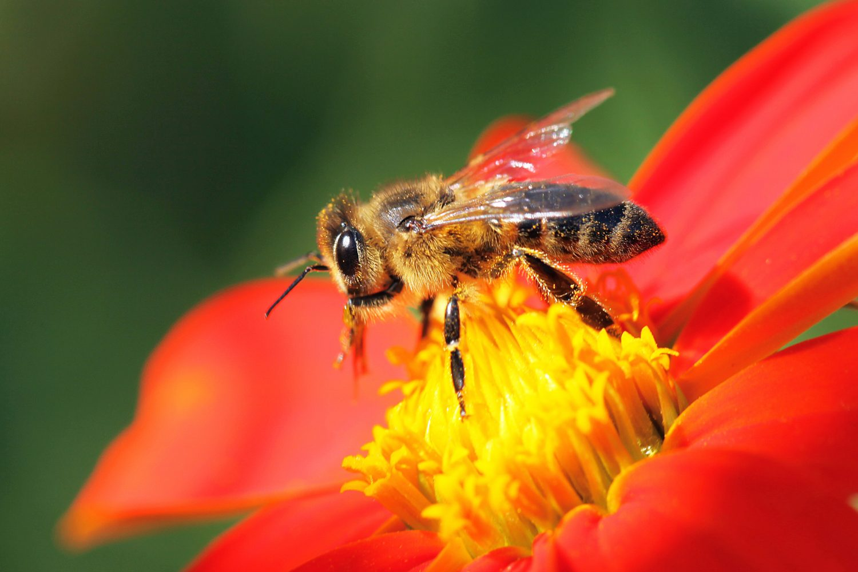 Keep Bees Buzzing
