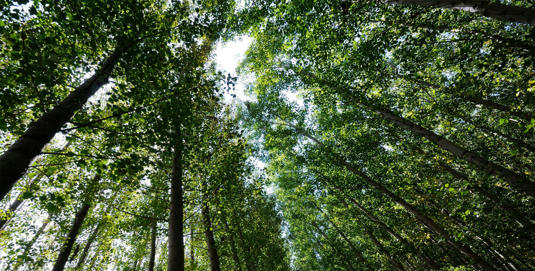 Forest Dhamma Meditation