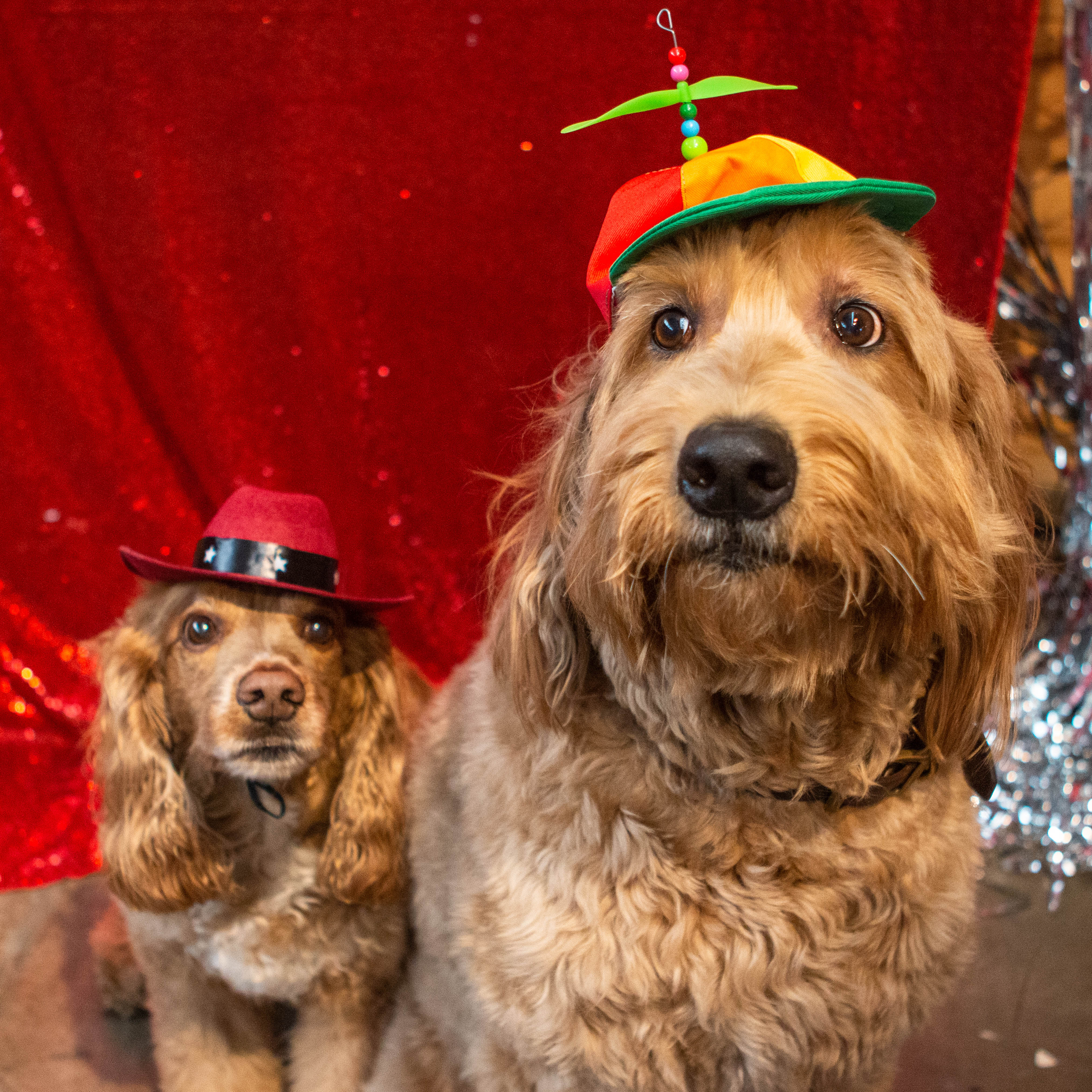 Enjoy our Doggy Photo Booth