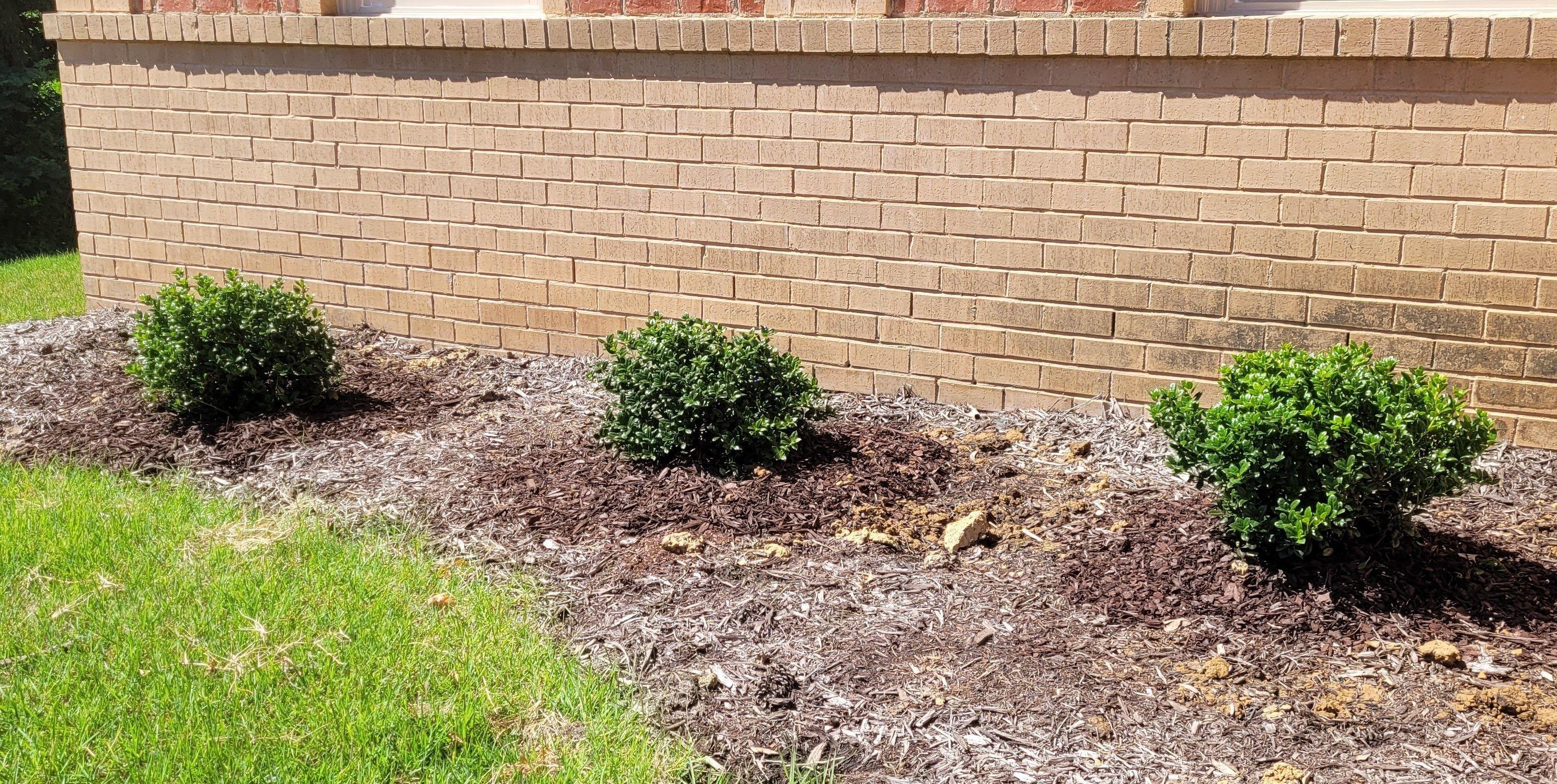 Plants from Dabney Nursery