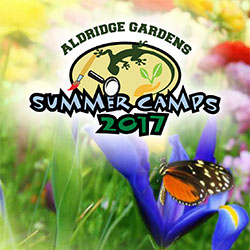 Summer Camp: Cool Art in the Gardens Grades 2nd-4th