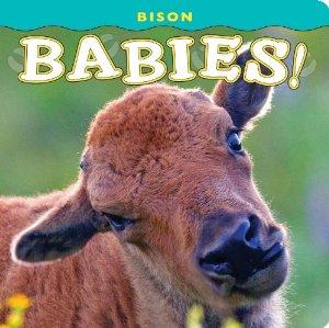 Bison Babies!  (board book)