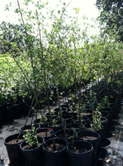 Last spring plant sale at Dry Creek Nursery