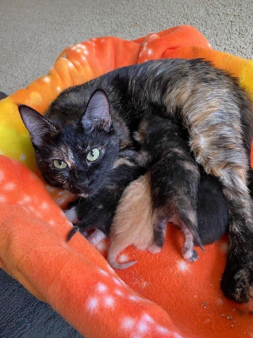 Apply to Be a Foster Parent!