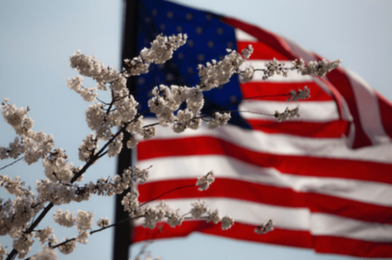 American flag in the distance behind cherry blossoms