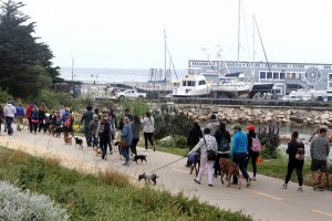 WALK YOUR OWN DOG TO RAISE FUNDS FOR SPCA ANIMALS