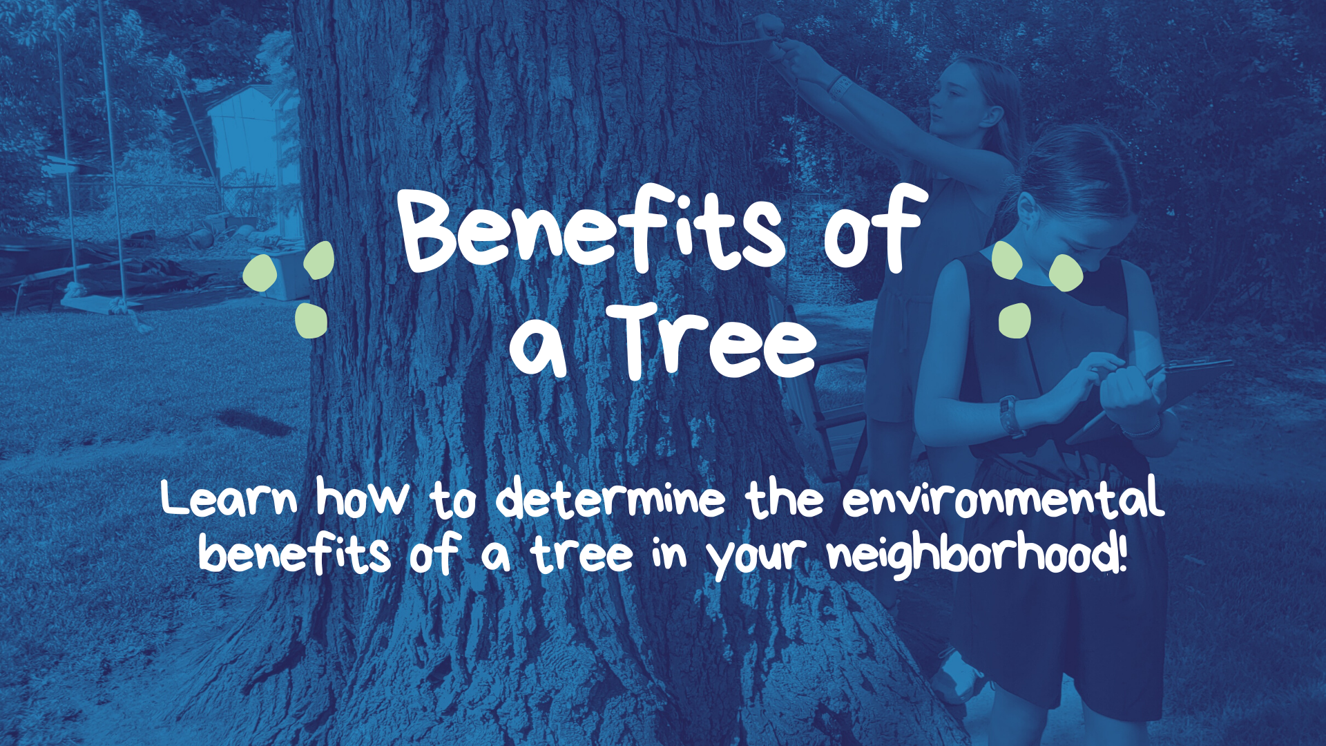 Benefits of a Tree