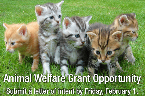 NEW THIS YEAR! Animal Welfare Grant Opportunity