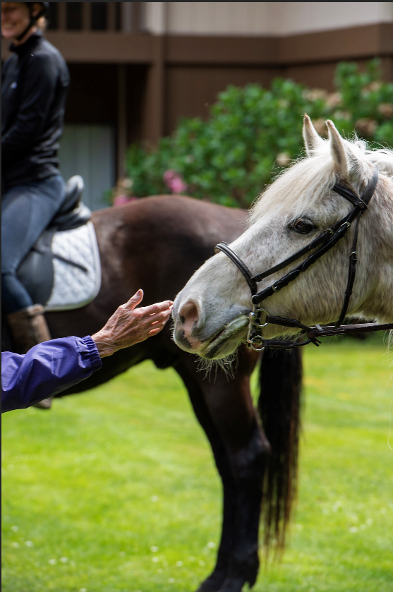 Horses bring smiles to Warm Beach Senior Community