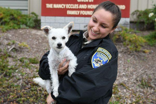 Notificar una Mascota Perdida a la SPCA
