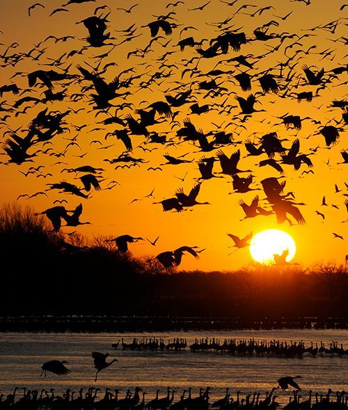 Spring: Sandhill Crane Migration