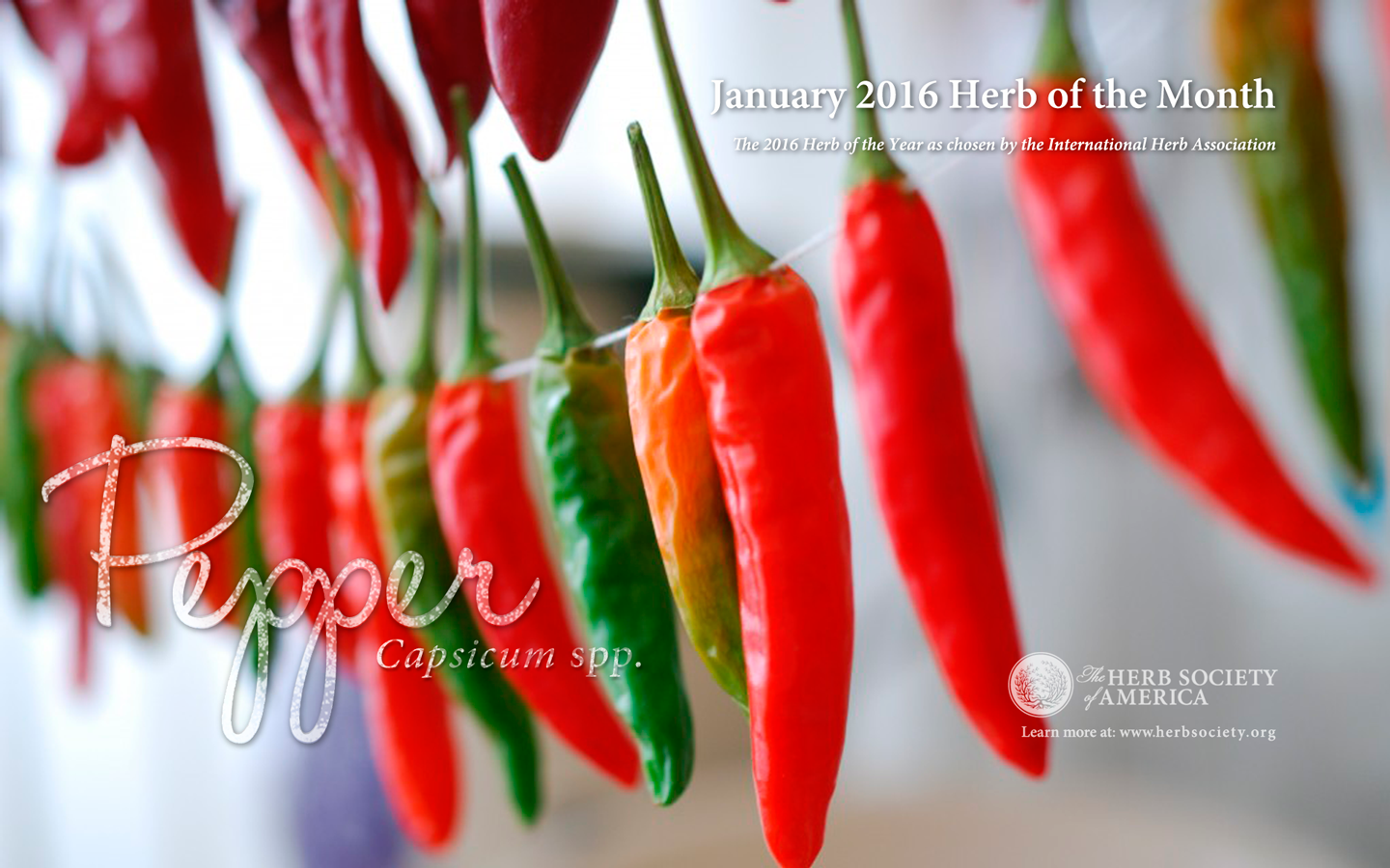 Chili Pepper Celebration