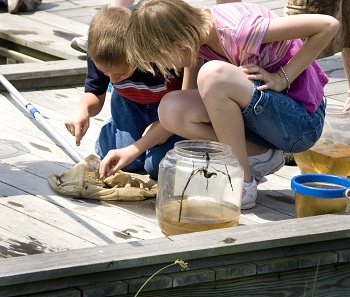 Science for Homeschoolers: Wild Investigations