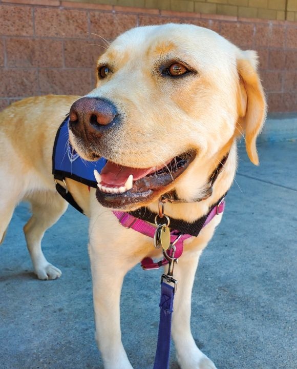 Public Awareness Events Dedicated to Dogs and Service Dogs