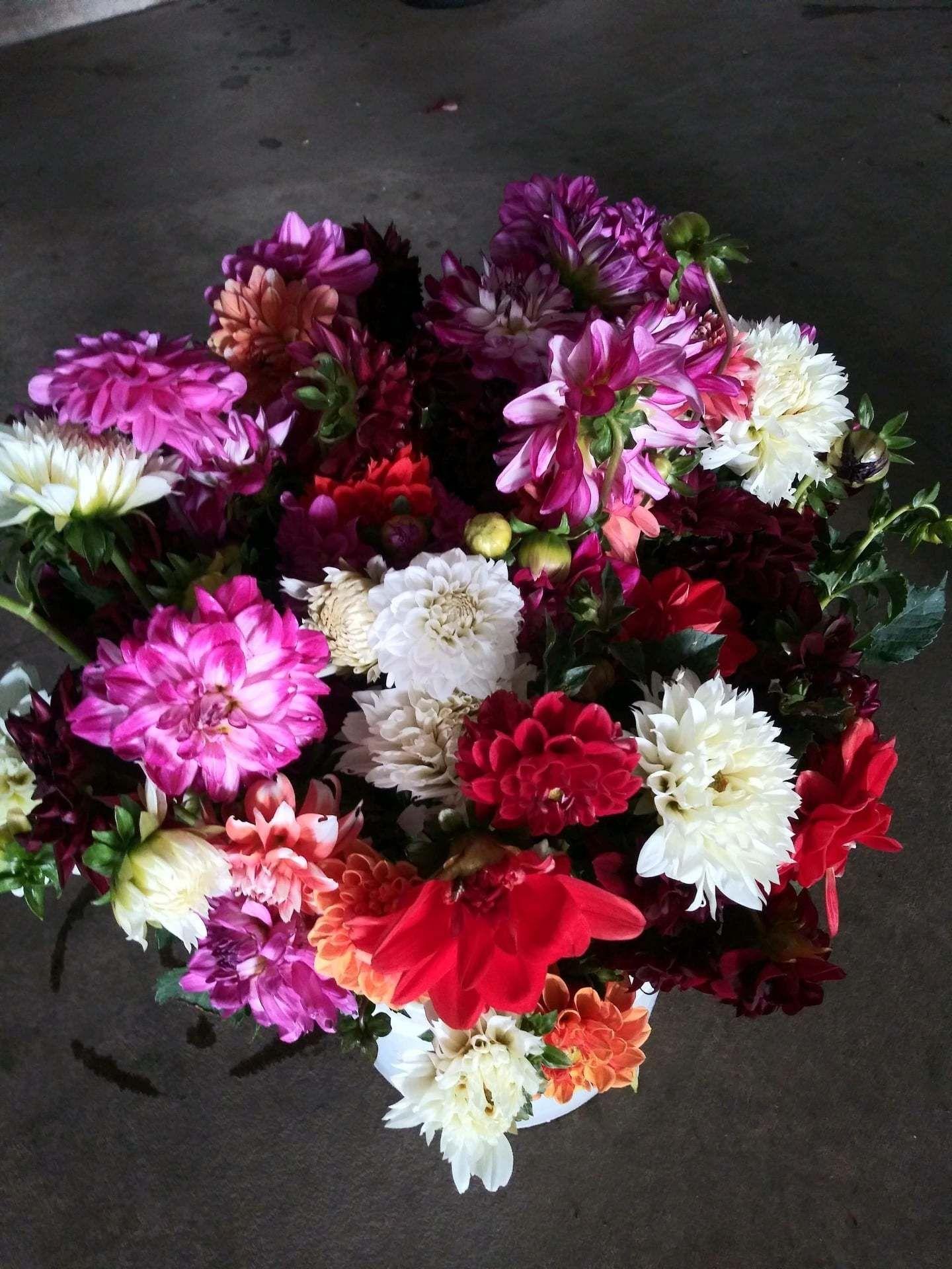 Lu's Flowers & Vegetables
