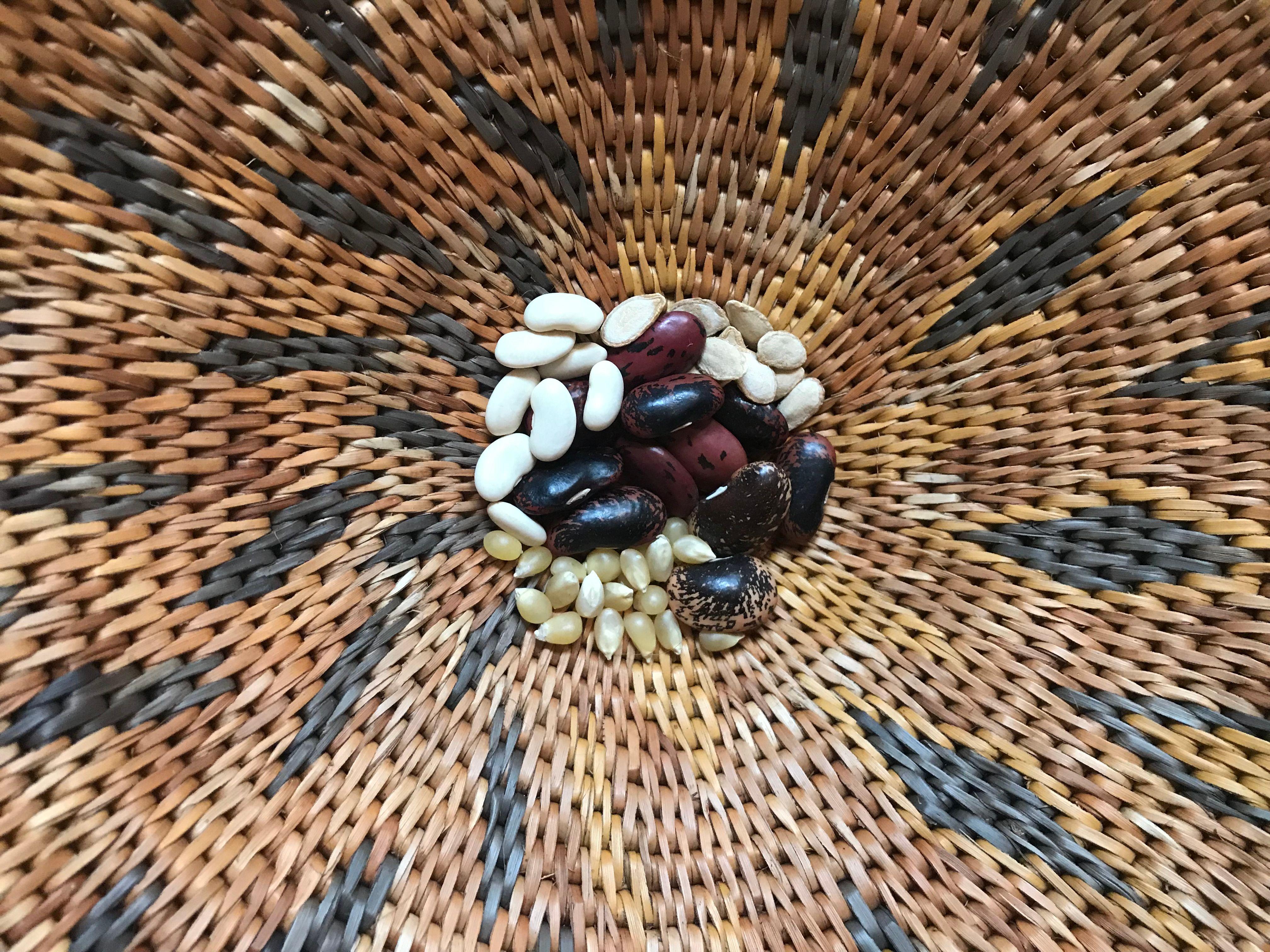 The Magic of Seeds: An Online Kids Class