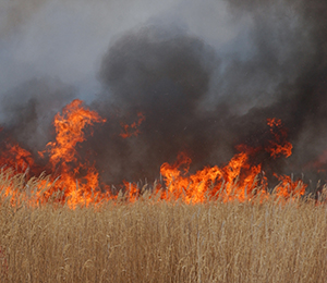 Alberta Fires Symptom of a Dry Province