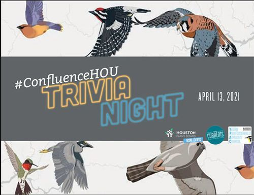 Confluence Trivia Night