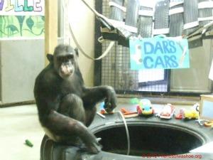 Dar's Cars