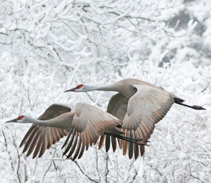 Springtime Birding
