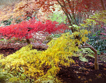 Japanese Maple Walk and Talk with David Doggett