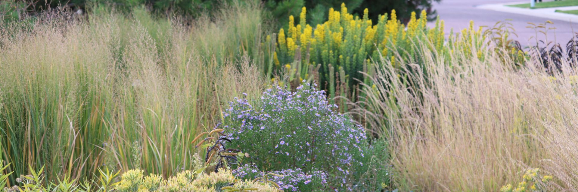 Landscapes for pollinators, stormwater, biodiversity