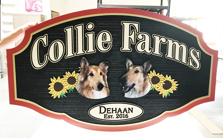 "O24510 - Carved and Sandblasted Entrance Sign to  ""Collie Farms"" with  Giclée  Photos of Collie Dogs and Sunflowers."