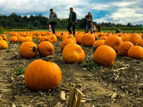 Pumpkin Patch Activities your Family will Love this Fall