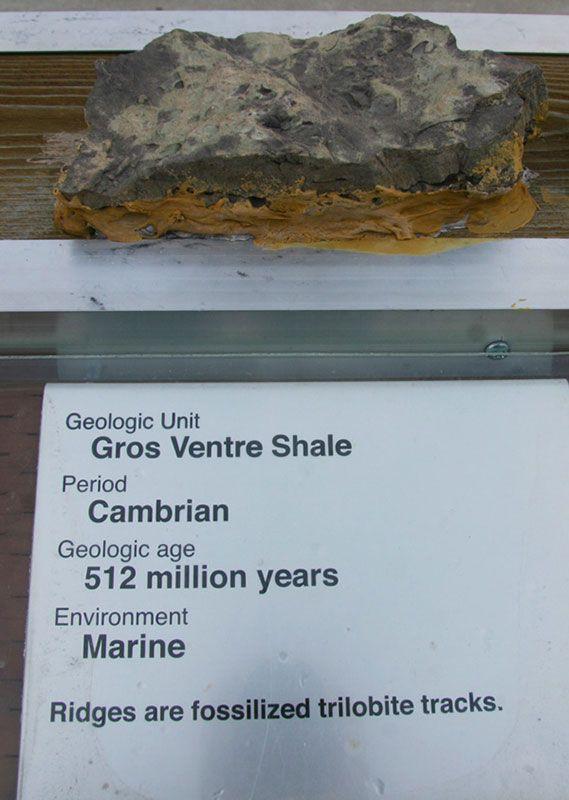 Gros Ventre Shale - Cambrian