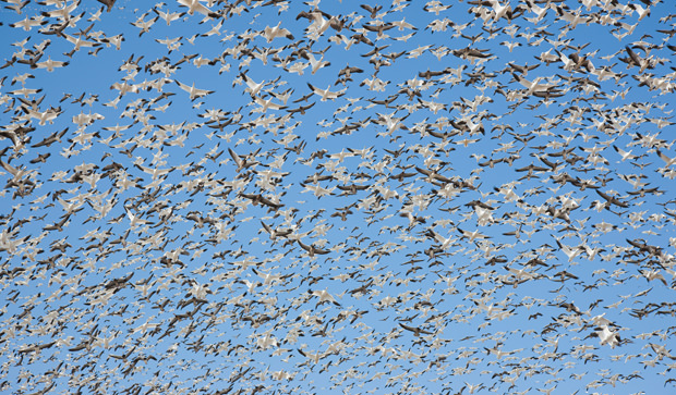 The clamour of spring migration