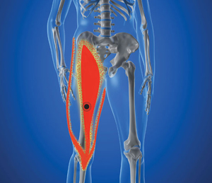 Spine & Sports Chiropractic : What Hurts? : Thigh & Groin : Quad Muscles