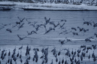 WHEN IS THE BEST TIME TO SEE SANDHILL CRANES IN NEBRASKA?