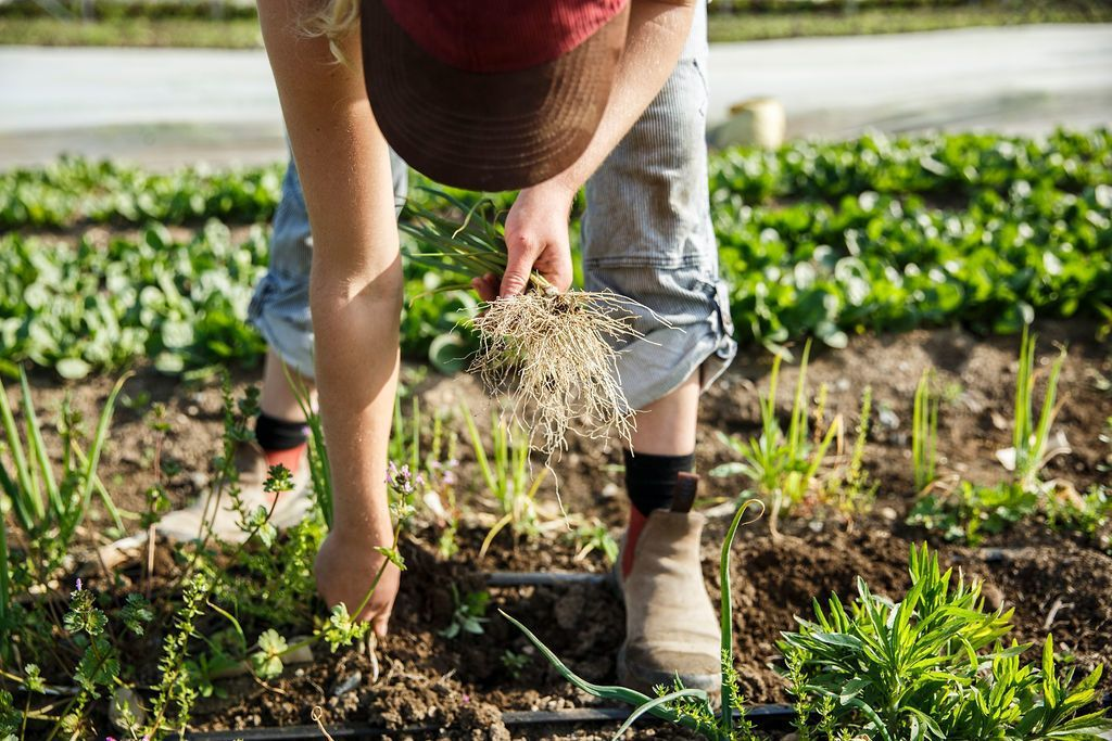 Soil Health Incentives
