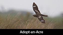 Adopt-an-Acre logo