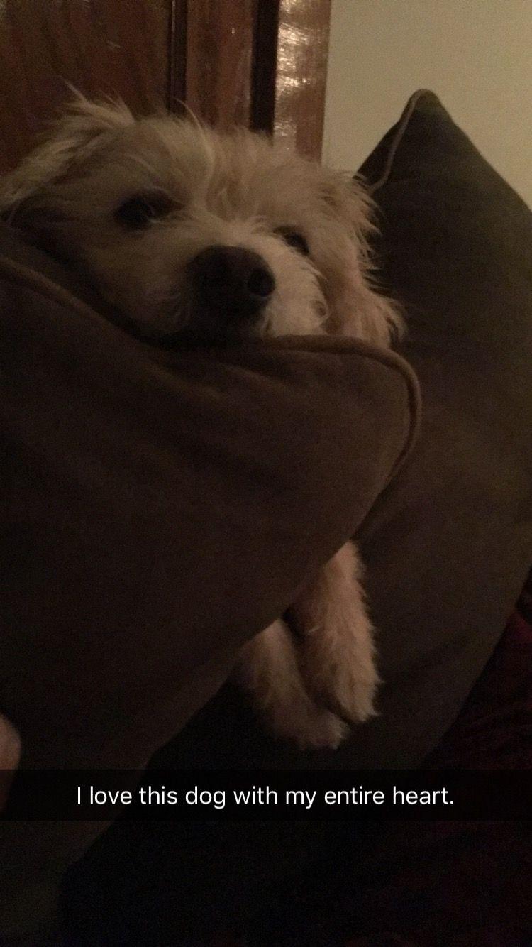 1/12/20: Finley (aka Benji)