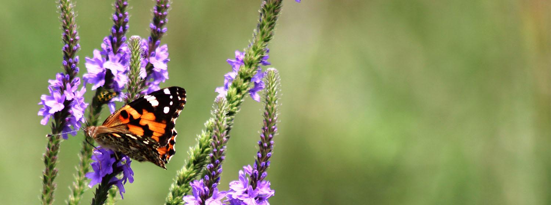 Crane Trust Nature and Visitor Center Family Day Pollinator Celebration