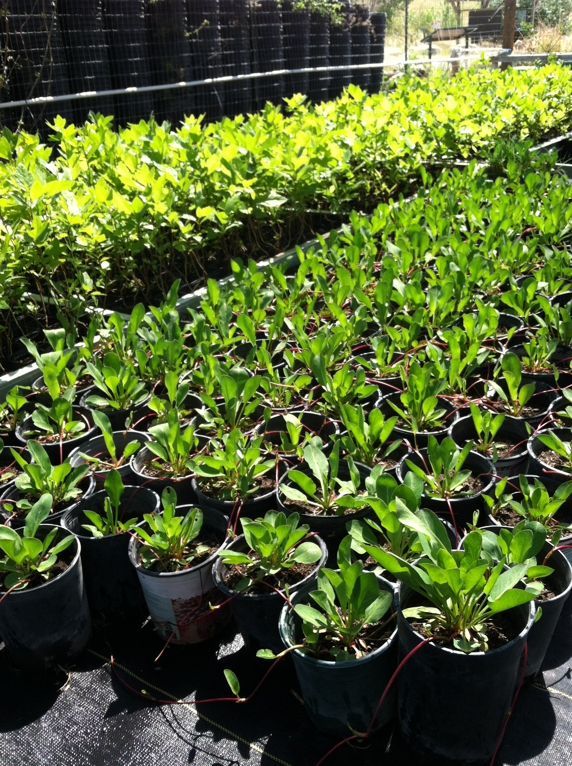 Dry Creek Nursery Plant Sale