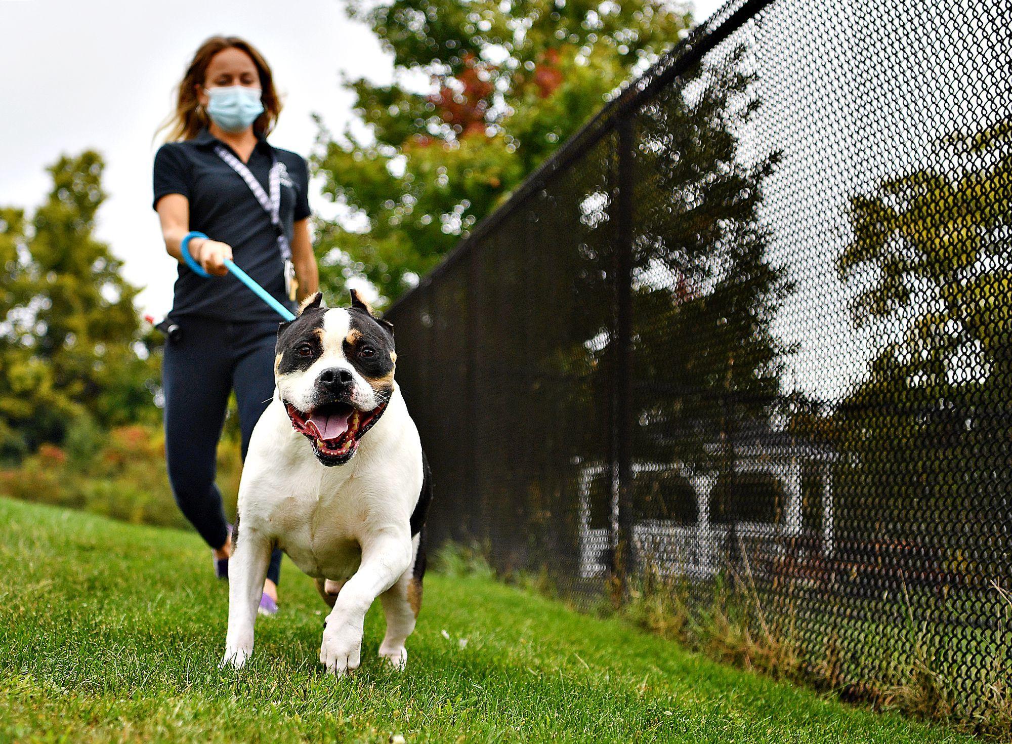 The Good Dog Advice Column: Leash Pulling