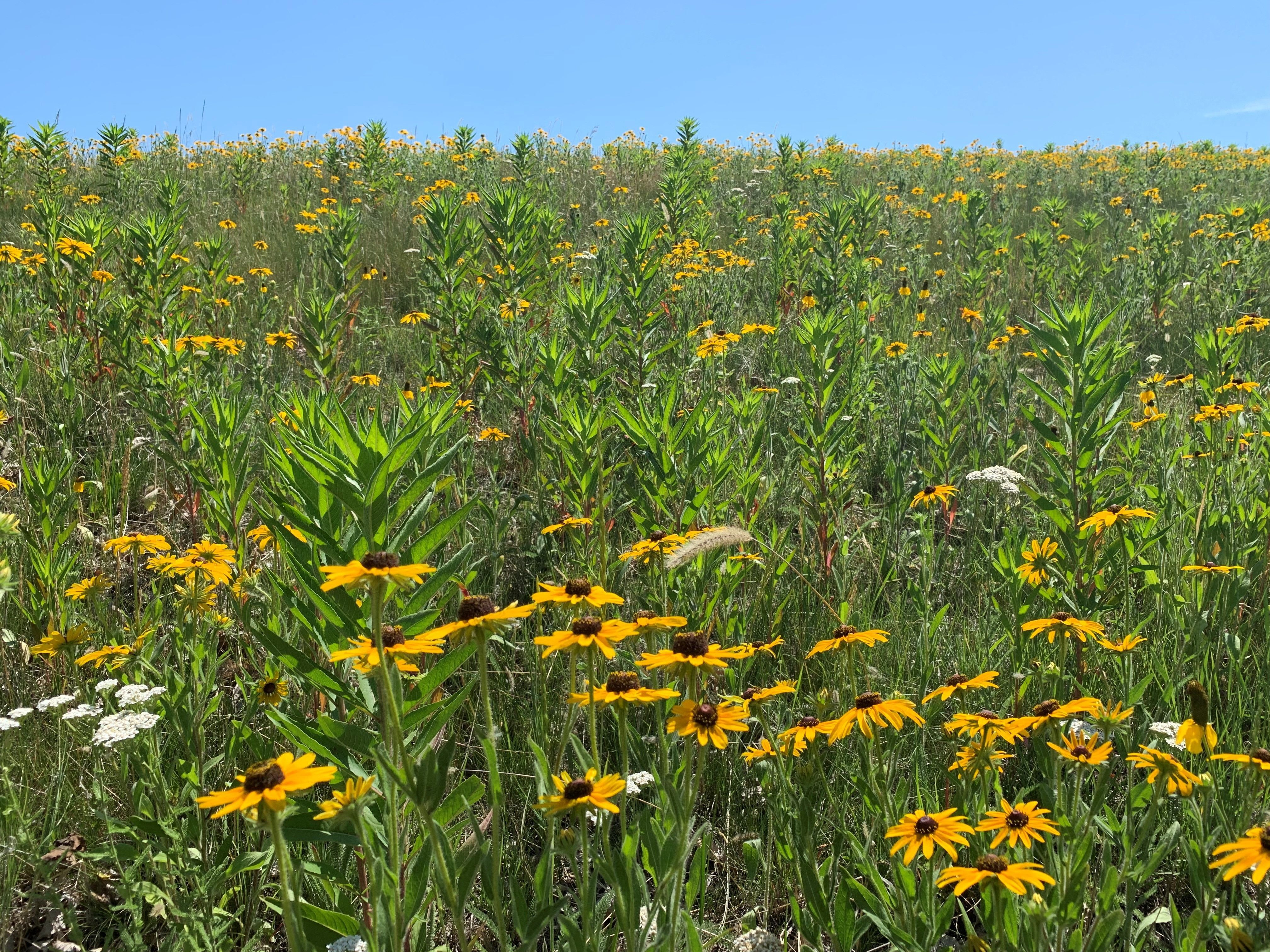 Our pollinator field is in full bloom!