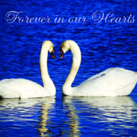 Forever in Our Hearts Card (Swans)