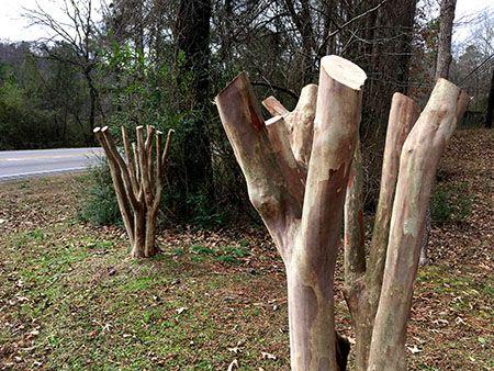 """Stop """"Crape Murder"""" - Pruning for Form Workshop"""